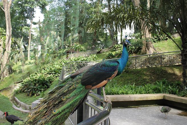 Парк птиц. Малайзия.