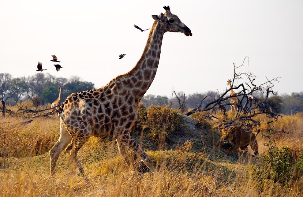 красивые фото животных природы