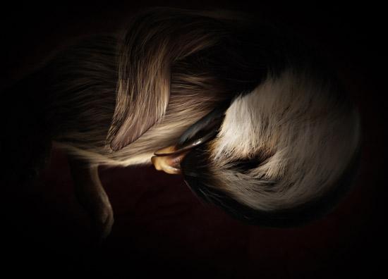 фото эмбриона пенгвин в утробе матери, животные в утробе матери фото