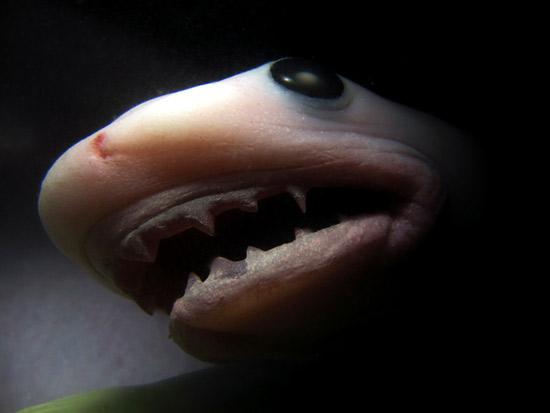 фото эмбриона акула в утробе матери, животные в утробе матери фото