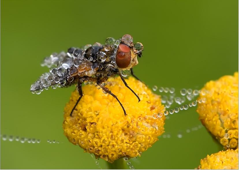 Макро фото насекомых, насекомые макро