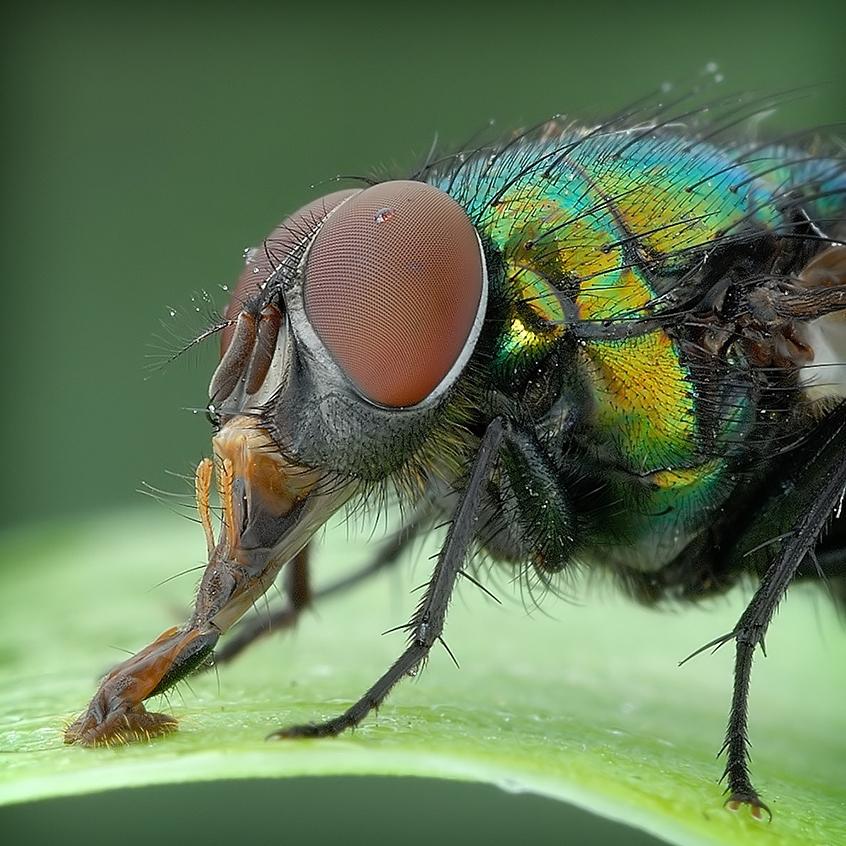 Самый многочисленный вид насекомых