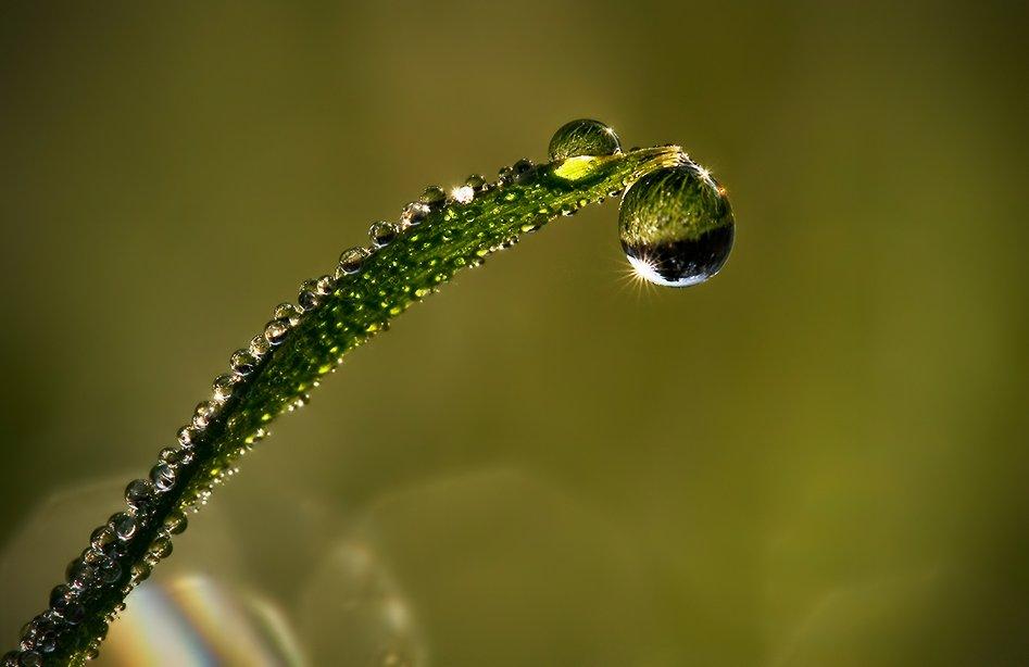 макро фото капли воды