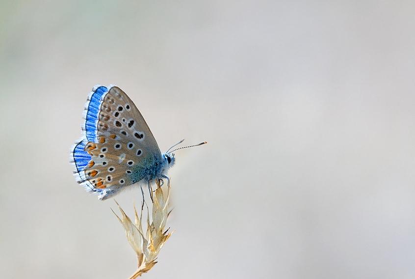Макро фото бабочки насекомых, насекомые макро