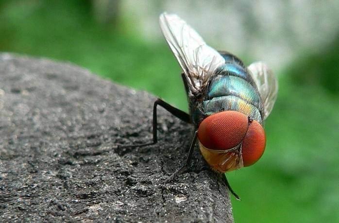 Макро фото насекомых насекомые макро