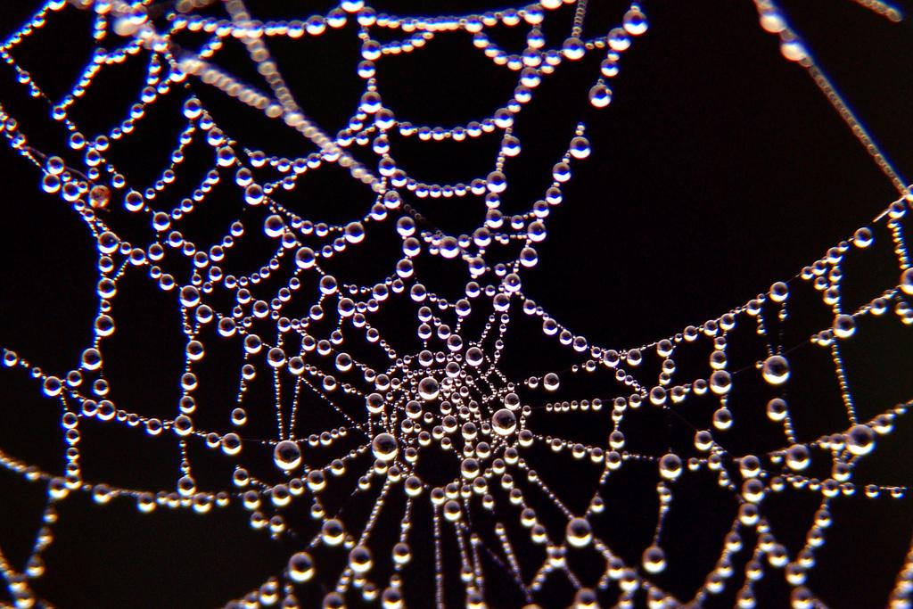 Паутина паука макро фото